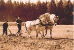 ploegen met 2 paarden