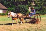Werkpaard 2003 175