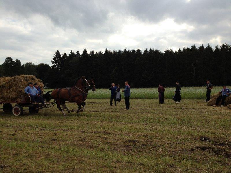 1_werkpaard-2012-127