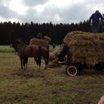 1_werkpaard-2012-123